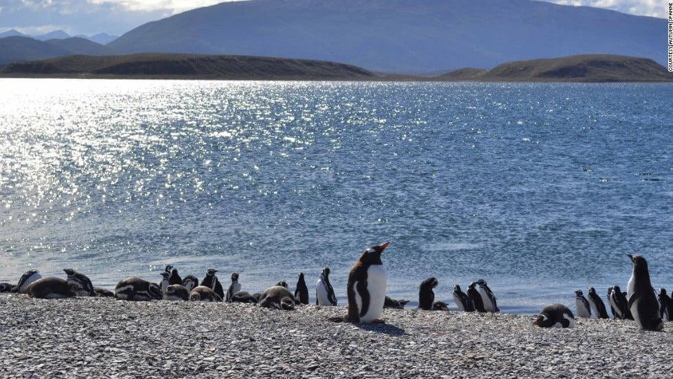 O que fazer no Parque Nacional Tierra del Fuego