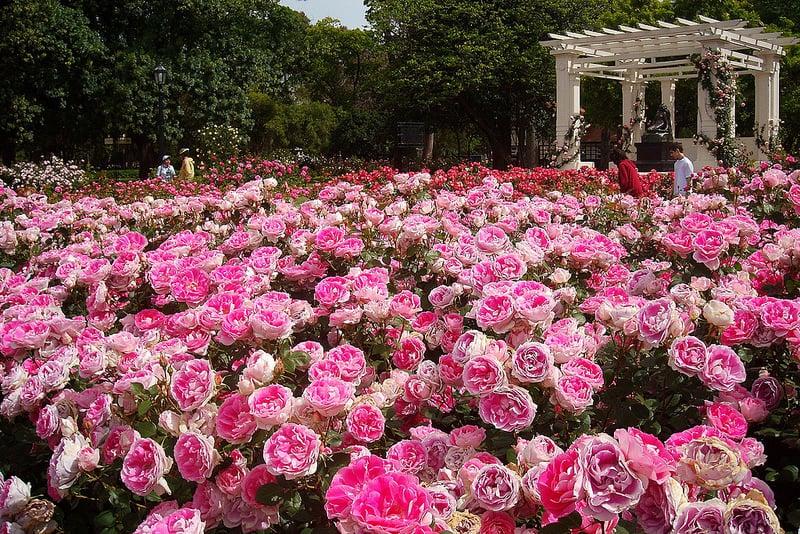 Visitar o El Rosedal na lua de mel em Buenos Aires