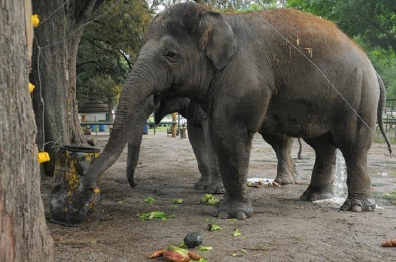 Elefante no Zoológico Luján