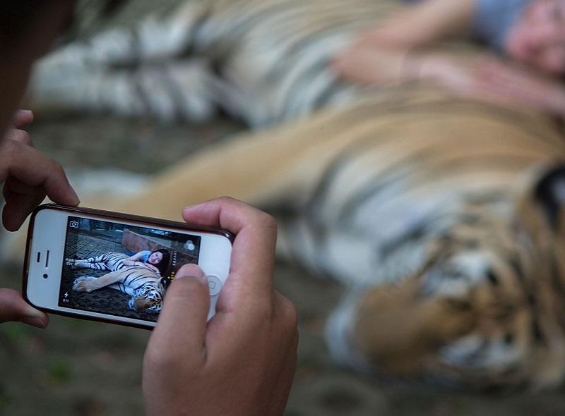 Tirando foto com tigre