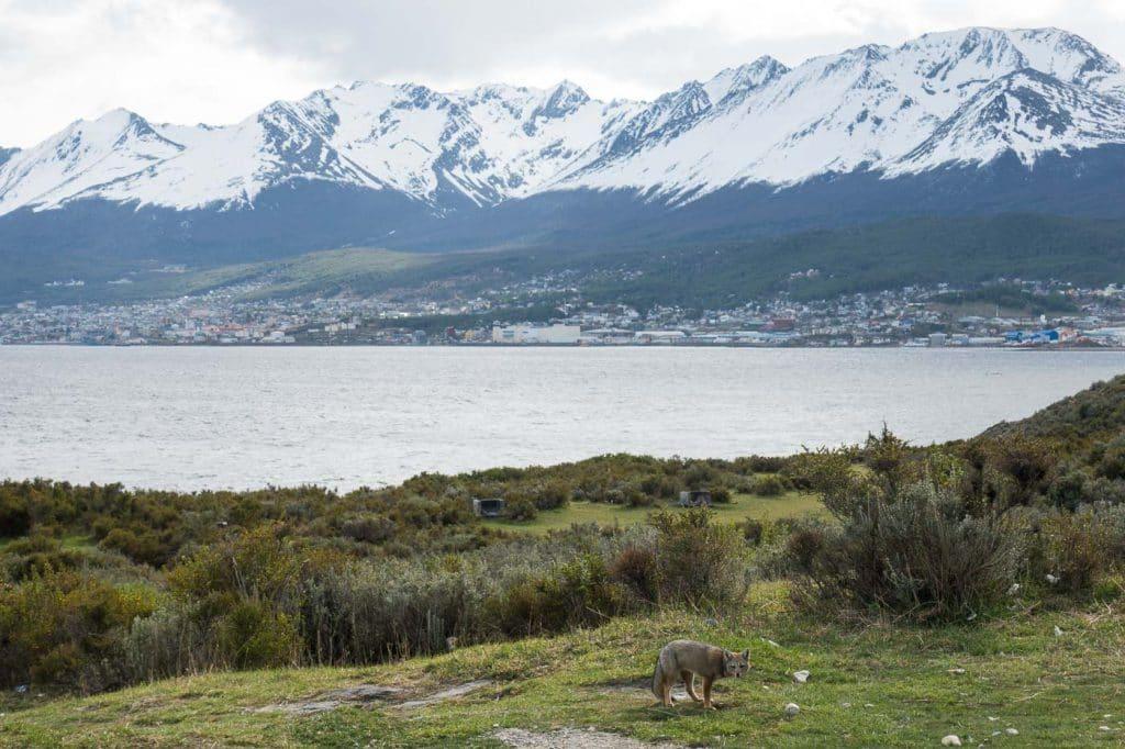 Paisagem de Ushuaia na primavera